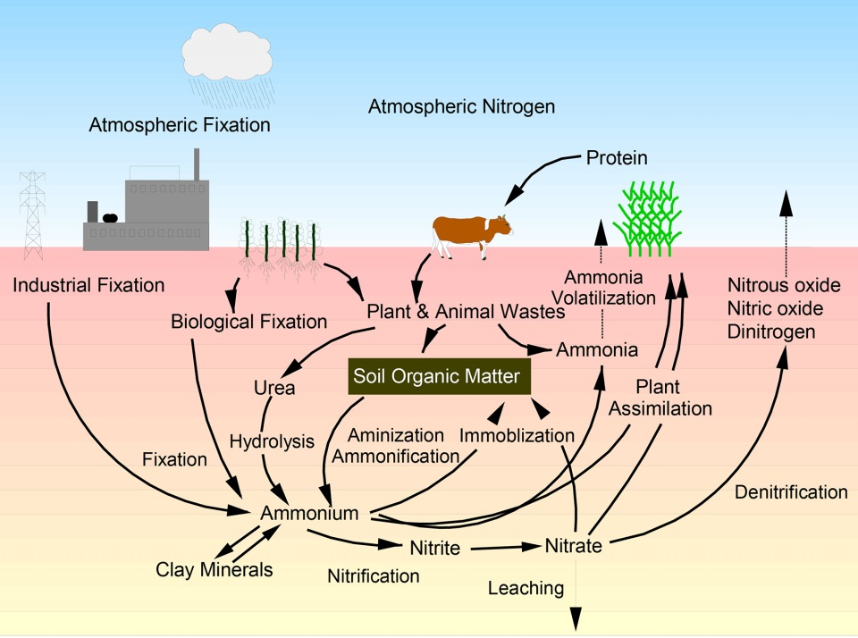 What you consume today becomes a resource for tomorrow ... |Wastewater Nutrient Cycle